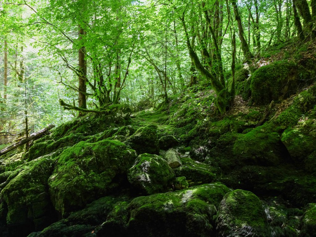 mer de rochers - la cascade du Pissieu