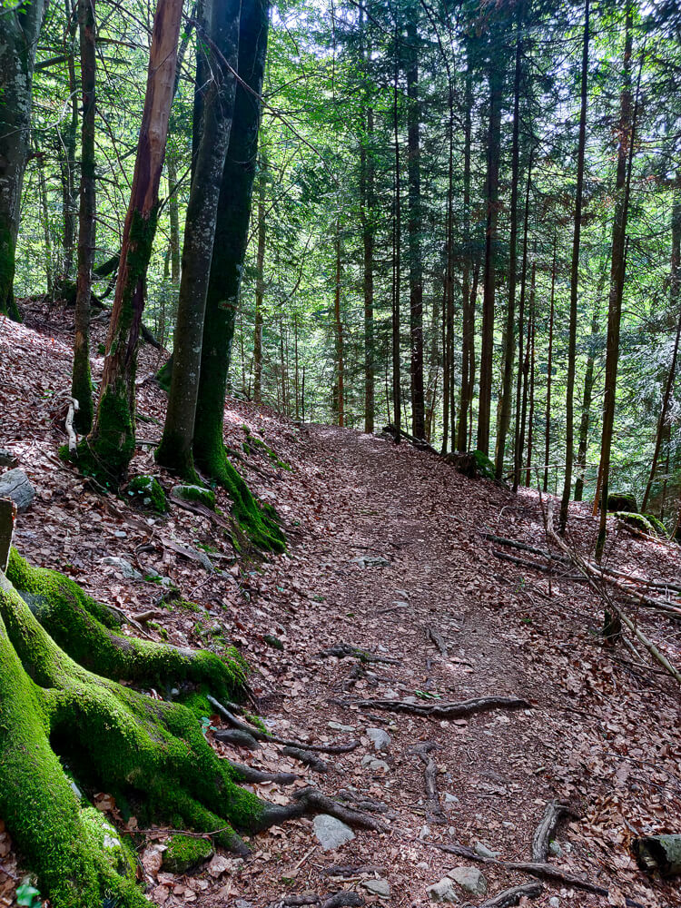 Sentier près de la cascade du dard