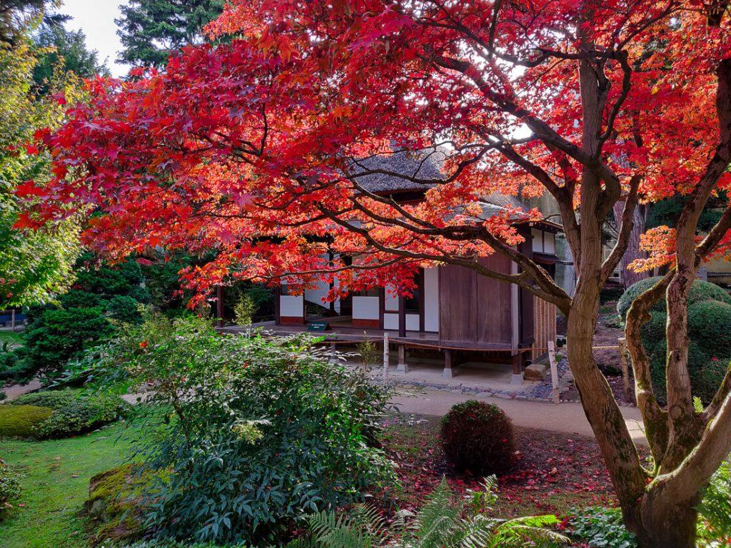 Erable devant maison traditionnelle - jardins Albert Kahn à l'automne
