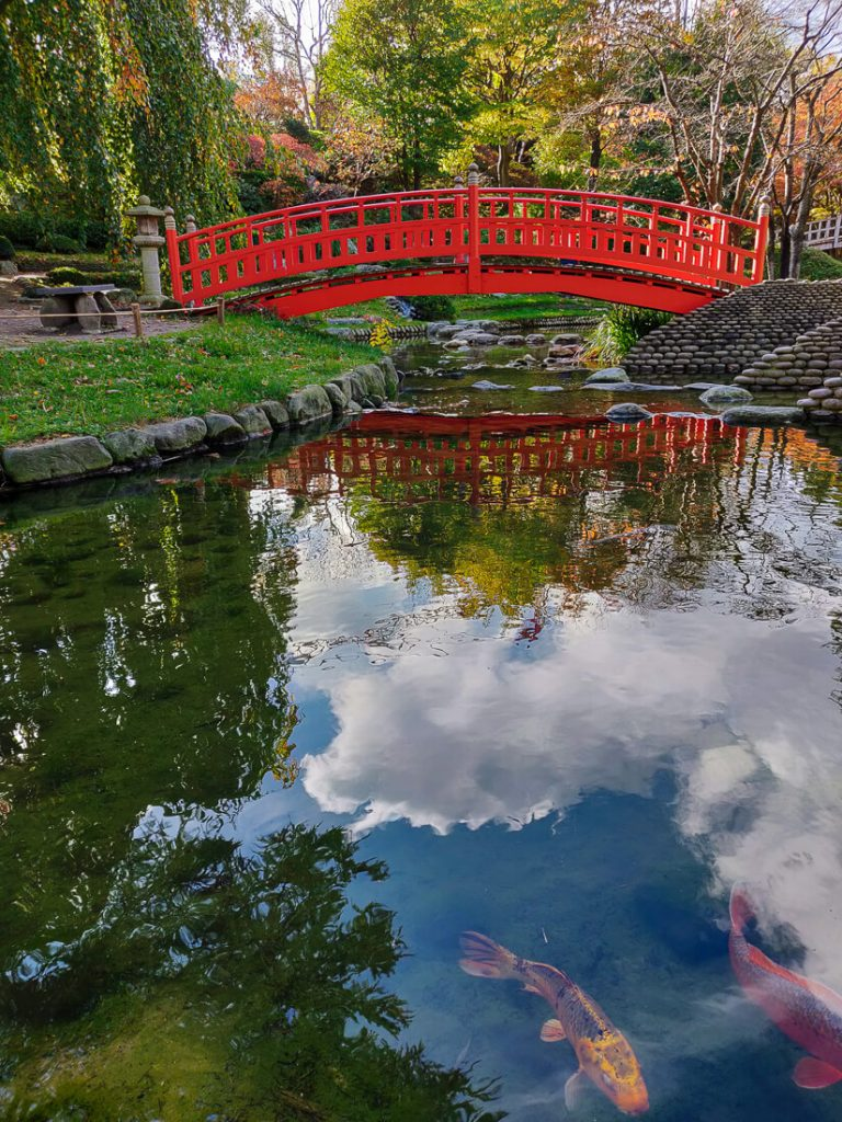 Koi devant le pont - jardins Albert Kahn à l'automne