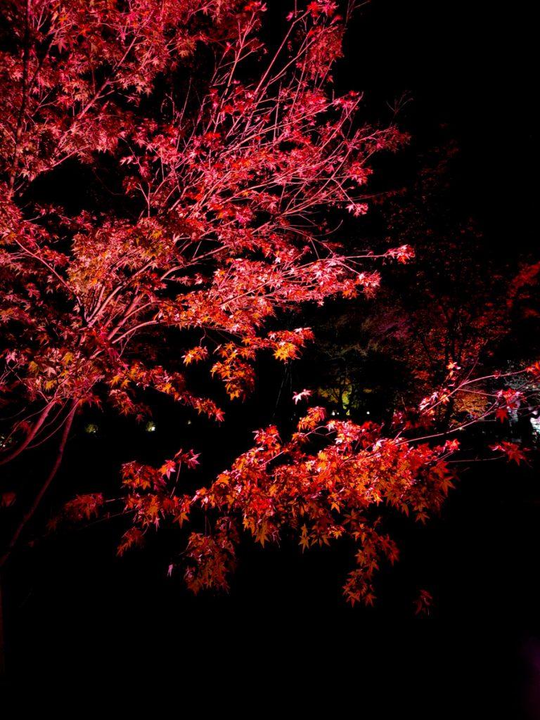 Momijigari, l'automne au Japon de nuit