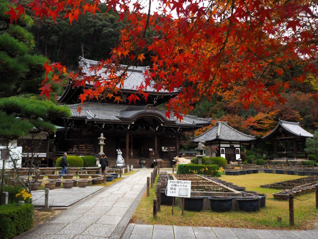 Le momijigari au Japon: Enceinte du temple Mimurotoji dans la ville d'Uji en automne