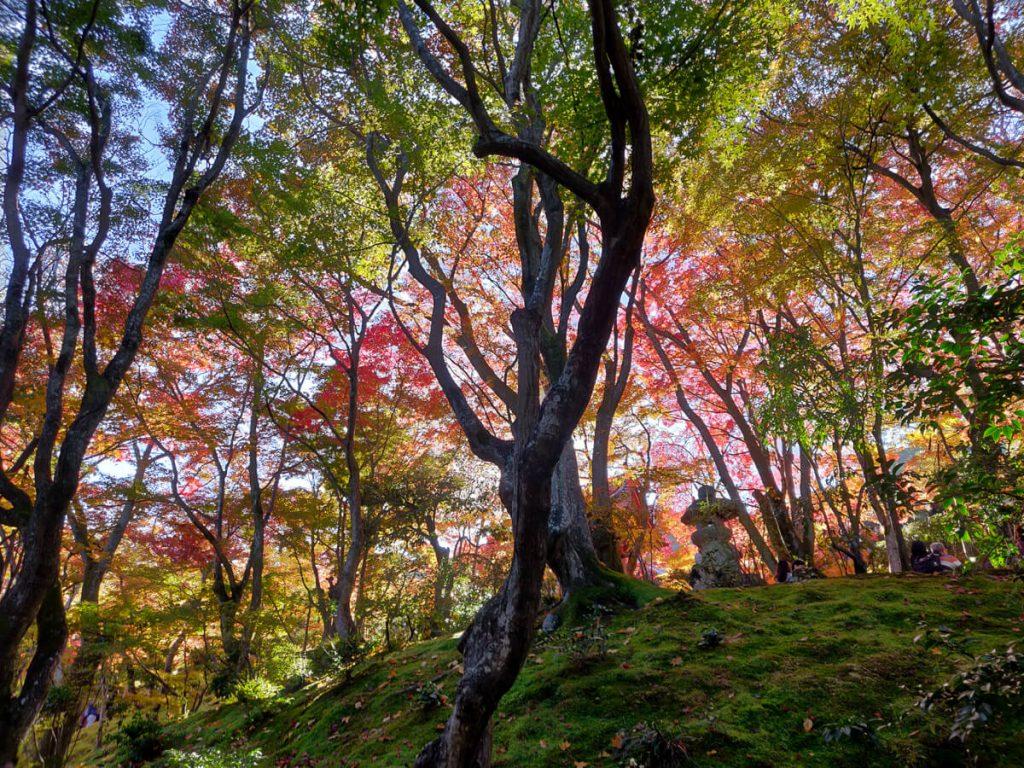 Le momijigari au Japon: les somptueuses couleurs d'automne dans un jardin