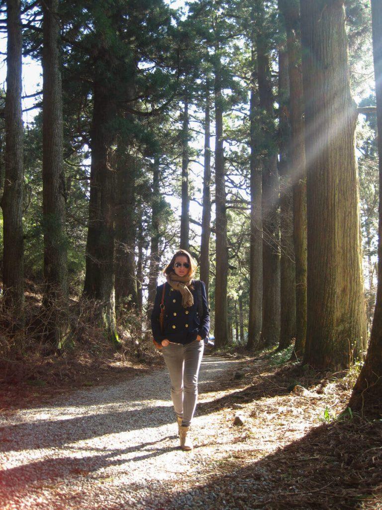 avenue des cèdres, Hakone