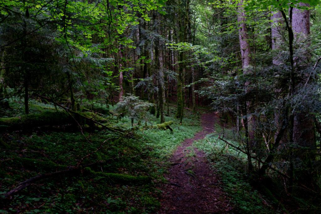 Le sentier sans la forêt - cascade d'Alex