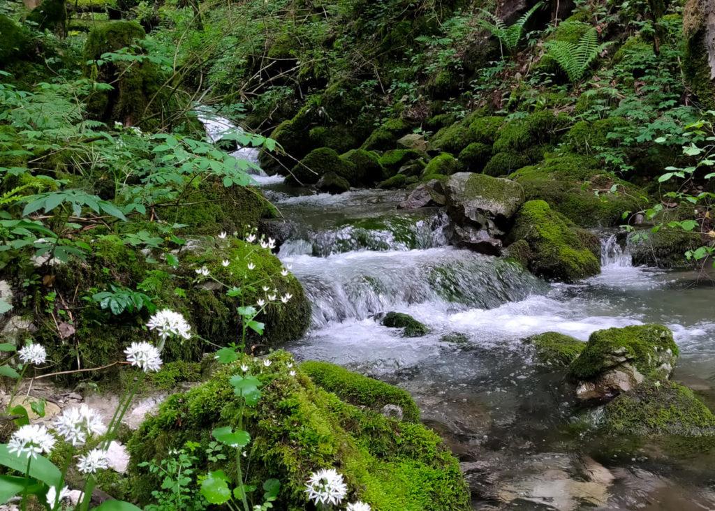 Ruisseau près du départ du sentier