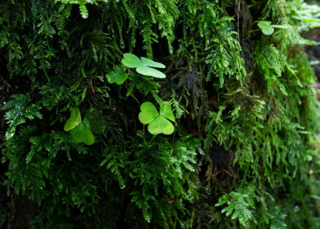 plantes prés de la cascade de la belle inconnue