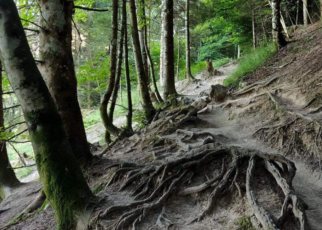Le Mont Veyrier sentier