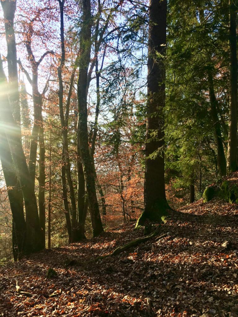sentier de la réserve naturelle du Roc de Chère en automne