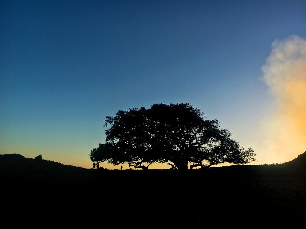 Coucher du soleil sur le volcan Telica, vue du seul arbre