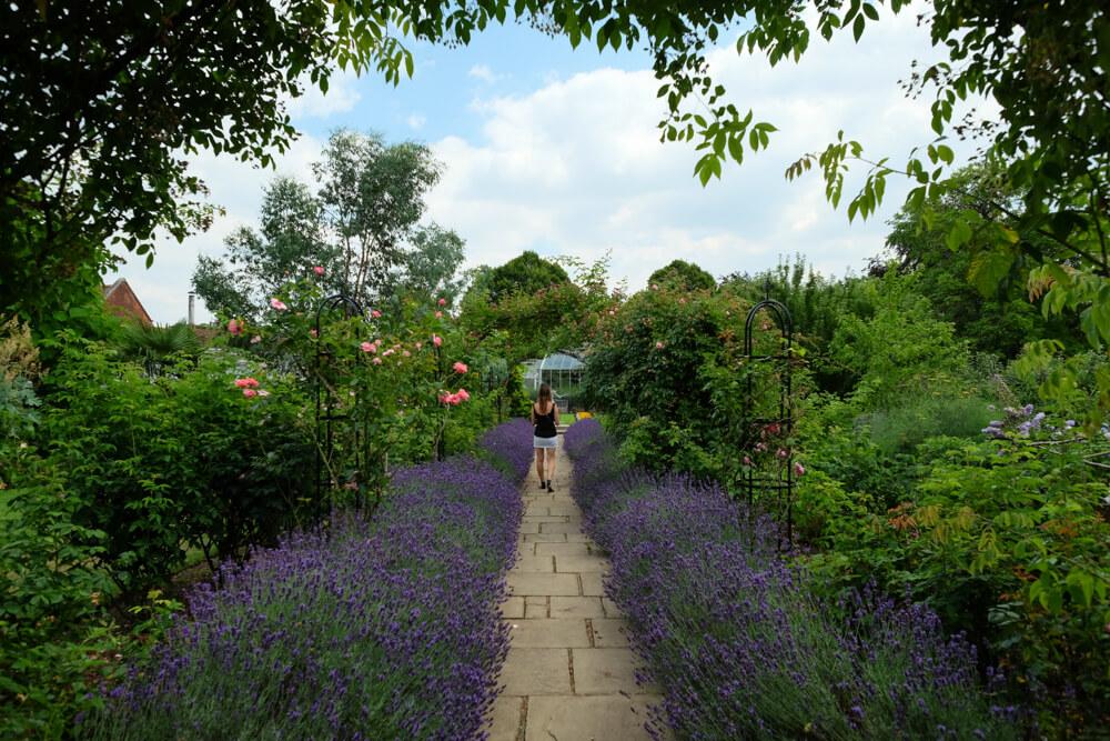 Avenue de lavande dans les jardins de Capel Manor, Enfield, Londres
